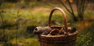 regalo cercatore funghi